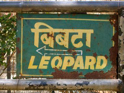 Toleopard